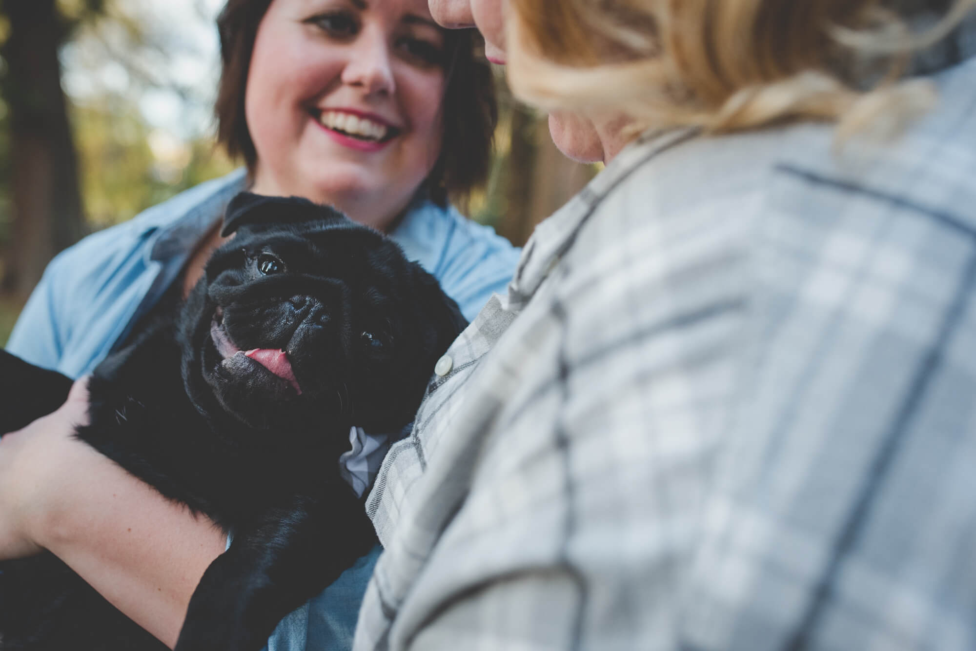 black pug puppy smiles for the camera | QE Park autumn engagement | Vancouver lesbian wedding photographer